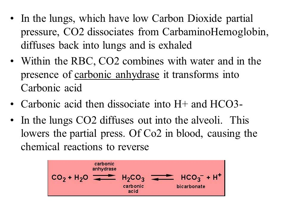 In the lungs, which have low Carbon Dioxide partial pressure, CO2 dissociates from CarbaminoHemoglobin, diffuses back into lungs and is exhaled
