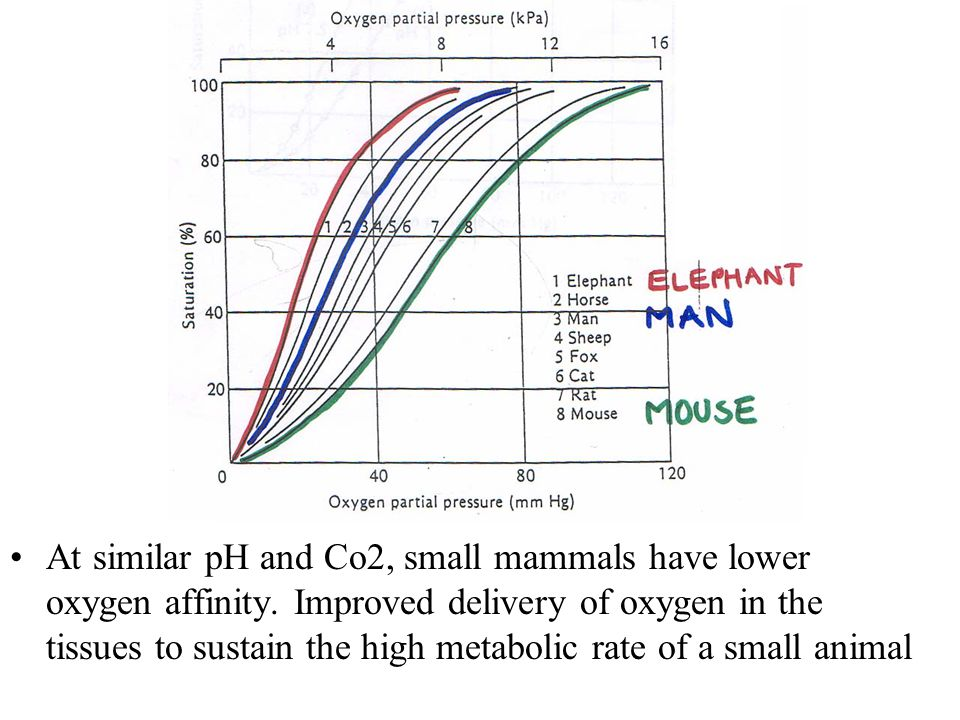 At similar pH and Co2, small mammals have lower oxygen affinity