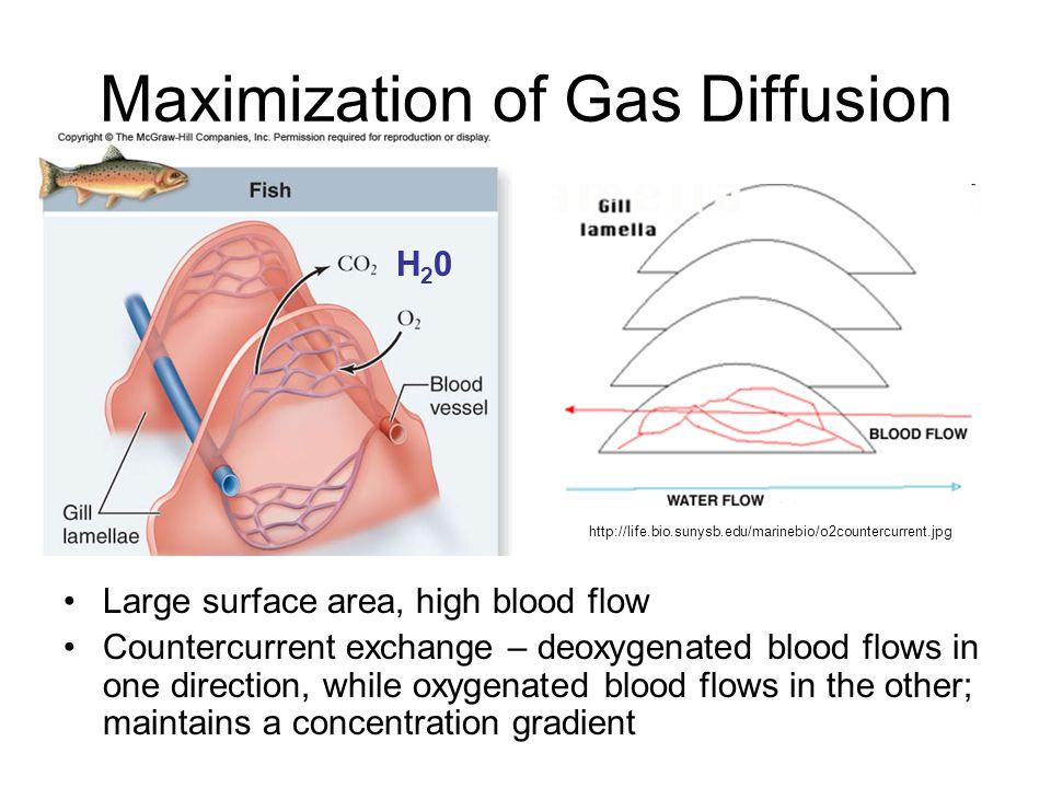 Maximization of Gas Diffusion