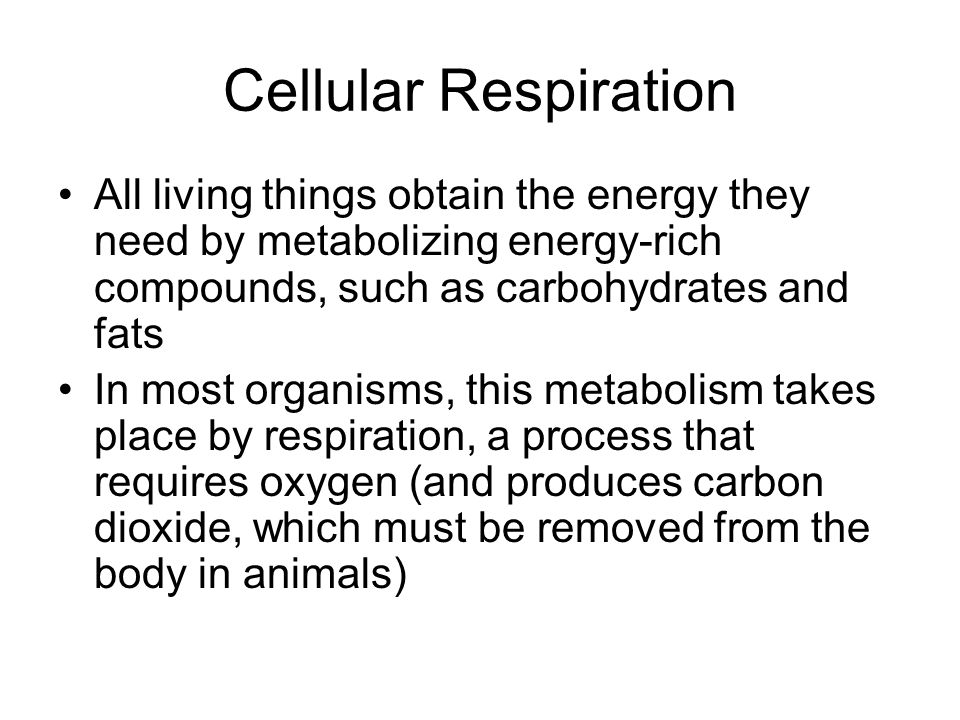 Cellular Respiration All living things obtain the energy they need by metabolizing energy-rich compounds, such as carbohydrates and fats.