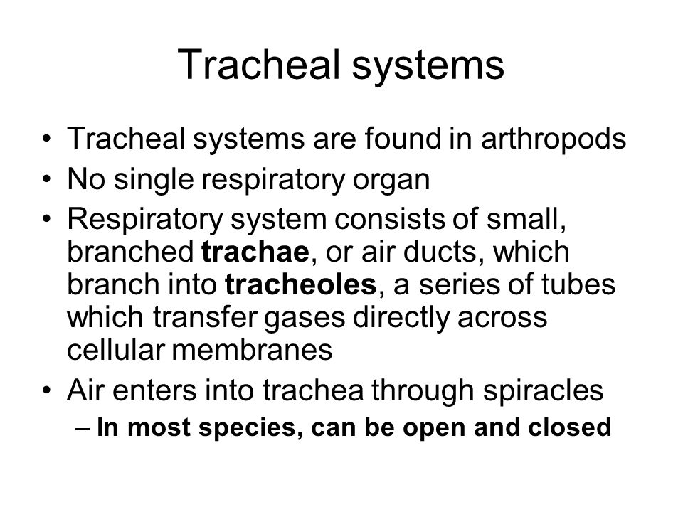 Tracheal systems Tracheal systems are found in arthropods