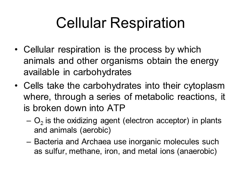 Cellular Respiration Cellular respiration is the process by which animals and other organisms obtain the energy available in carbohydrates.