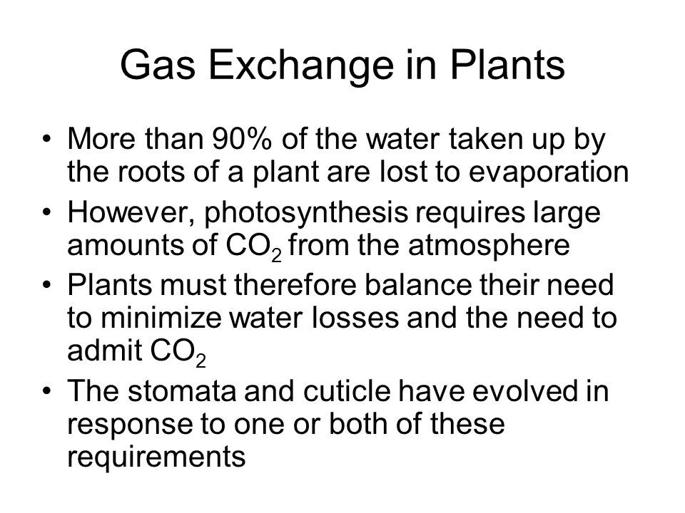 Gas Exchange in Plants More than 90% of the water taken up by the roots of a plant are lost to evaporation.