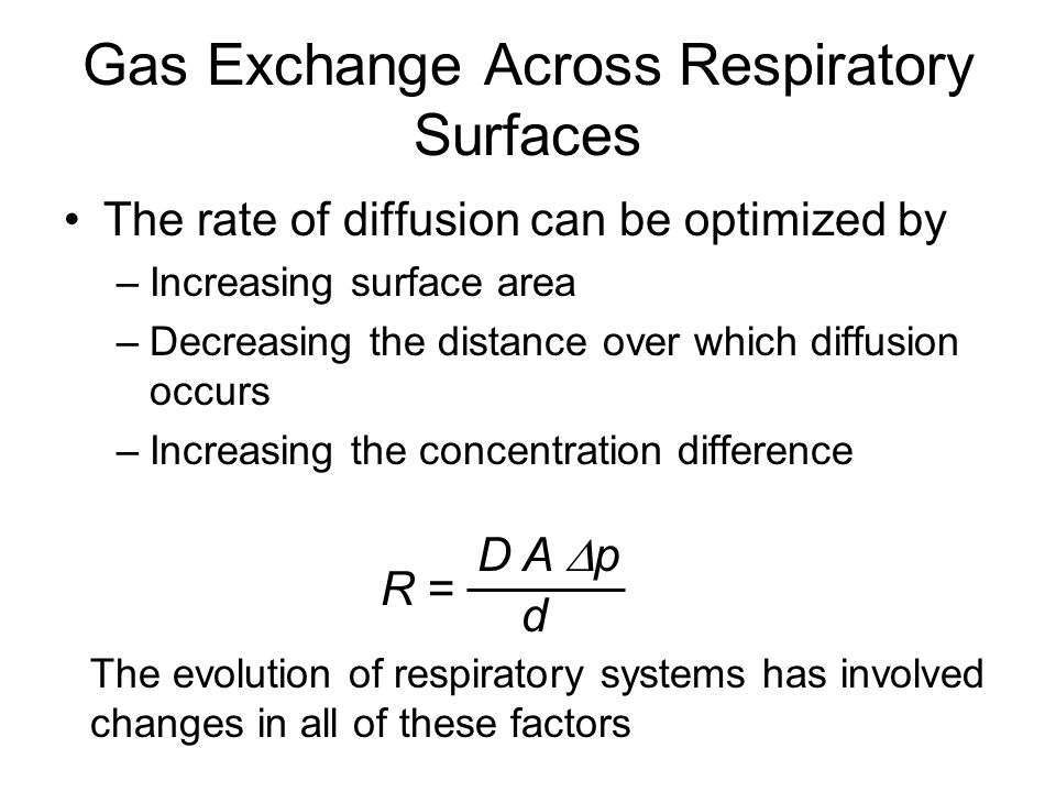 Gas Exchange Across Respiratory Surfaces