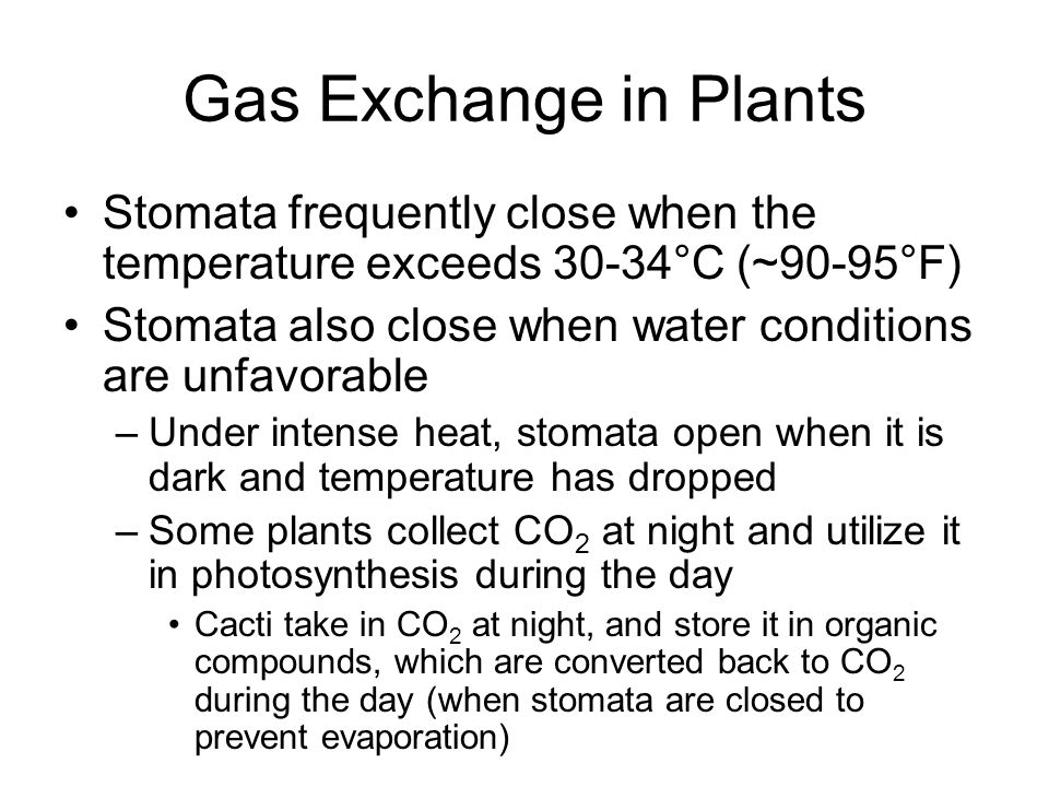 Gas Exchange in Plants Stomata frequently close when the temperature exceeds 30-34°C (~90-95°F)