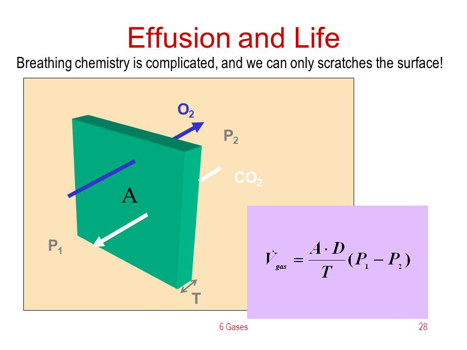 Effusion and Life Breathing chemistry is complicated, and we can only scratches the surface! O2. CO2.