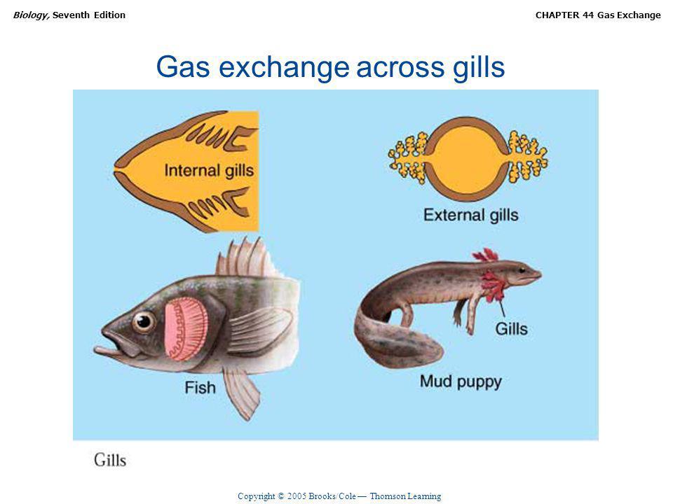 Gas exchange across gills