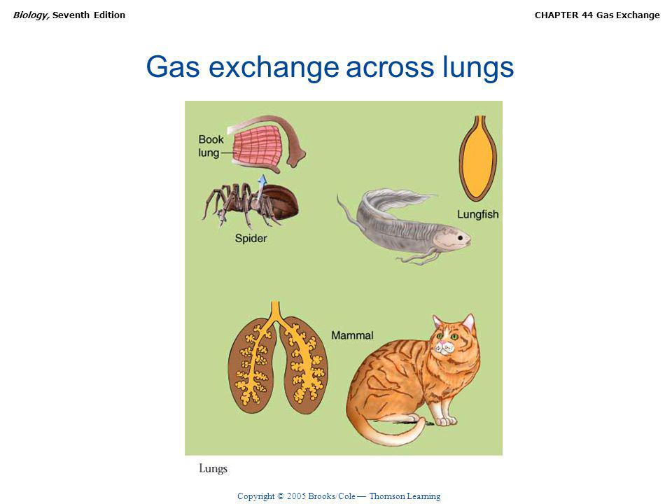 Gas exchange across lungs