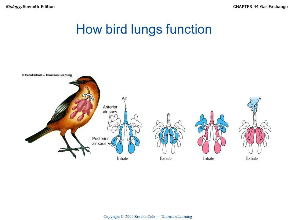How bird lungs function