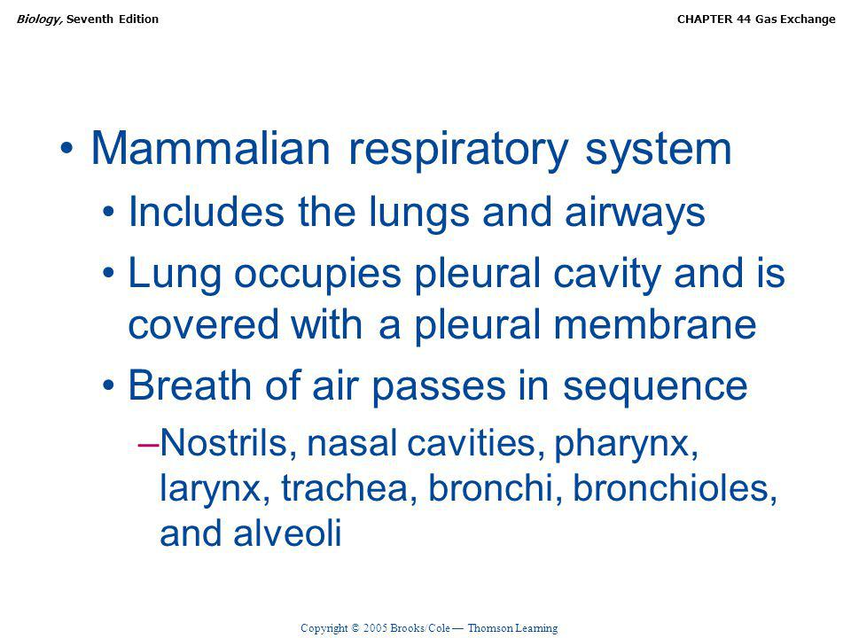 Mammalian respiratory system
