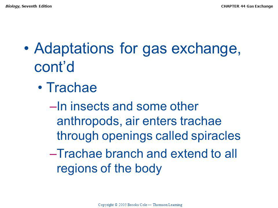 Adaptations for gas exchange, cont'd