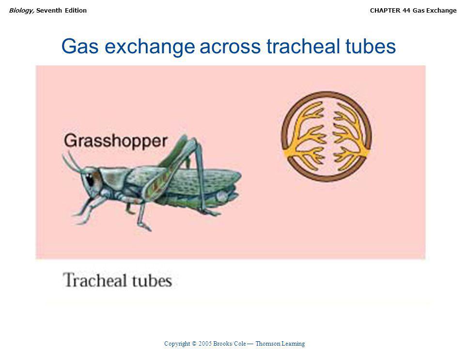 Gas exchange across tracheal tubes