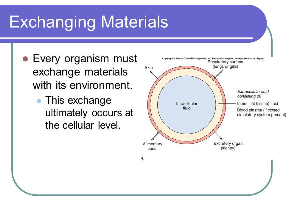 Exchanging Materials Every organism must exchange materials with its environment.