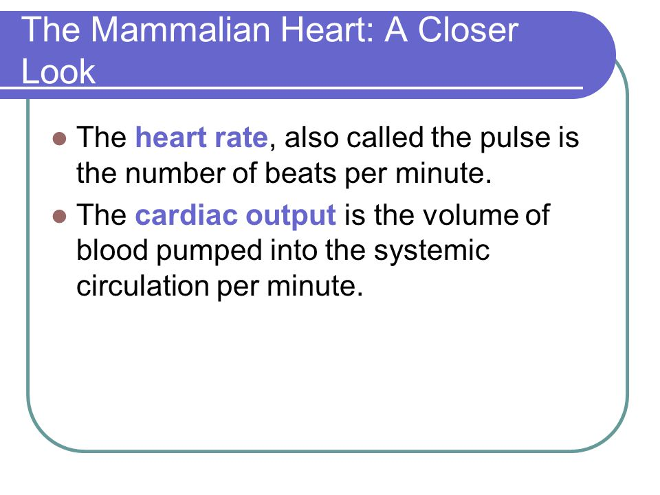 The Mammalian Heart: A Closer Look