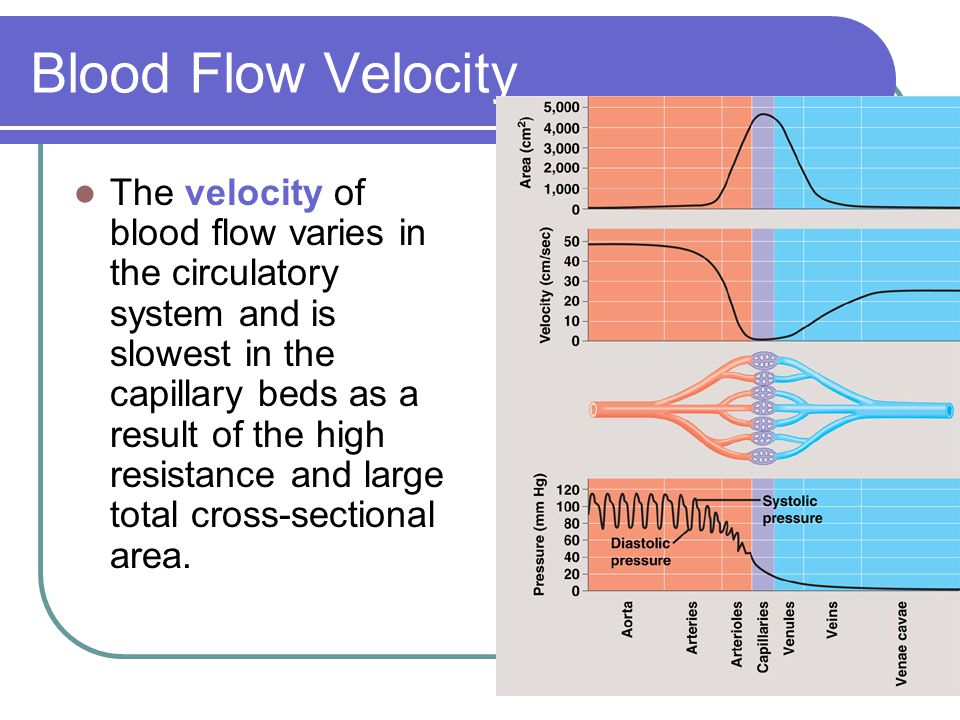 Blood Flow Velocity