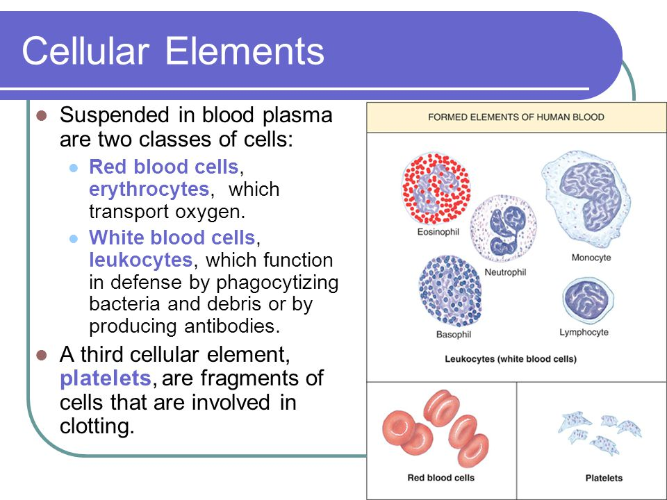 Cellular Elements Suspended in blood plasma are two classes of cells: