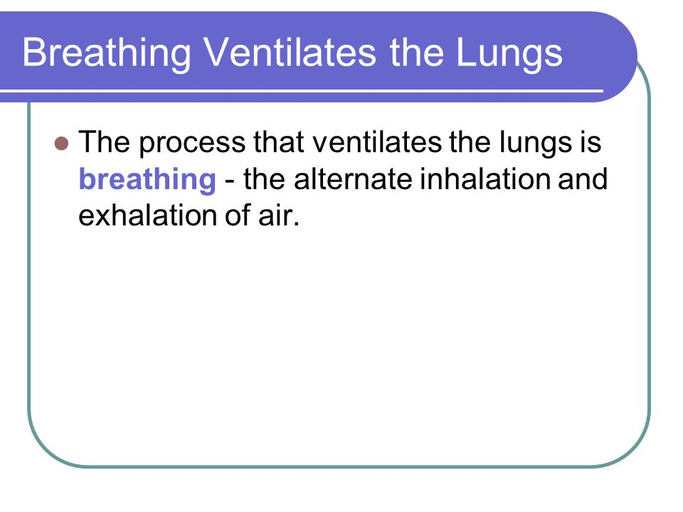 Breathing Ventilates the Lungs