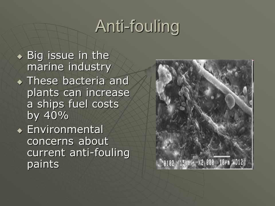 Anti-fouling Big issue in the marine industry
