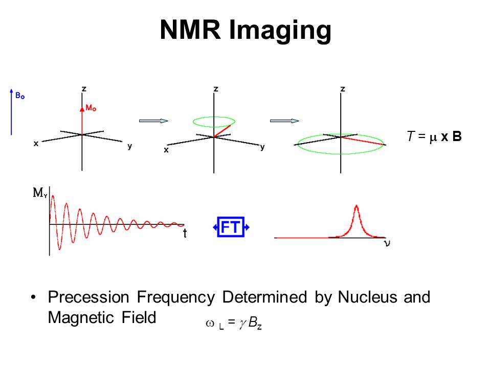 NMR Imaging T =  x B Precession Frequency Determined by Nucleus and Magnetic Field  L =  Bz