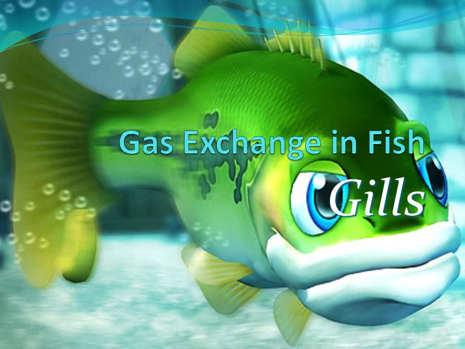 Gas Exchange in Fish Gills