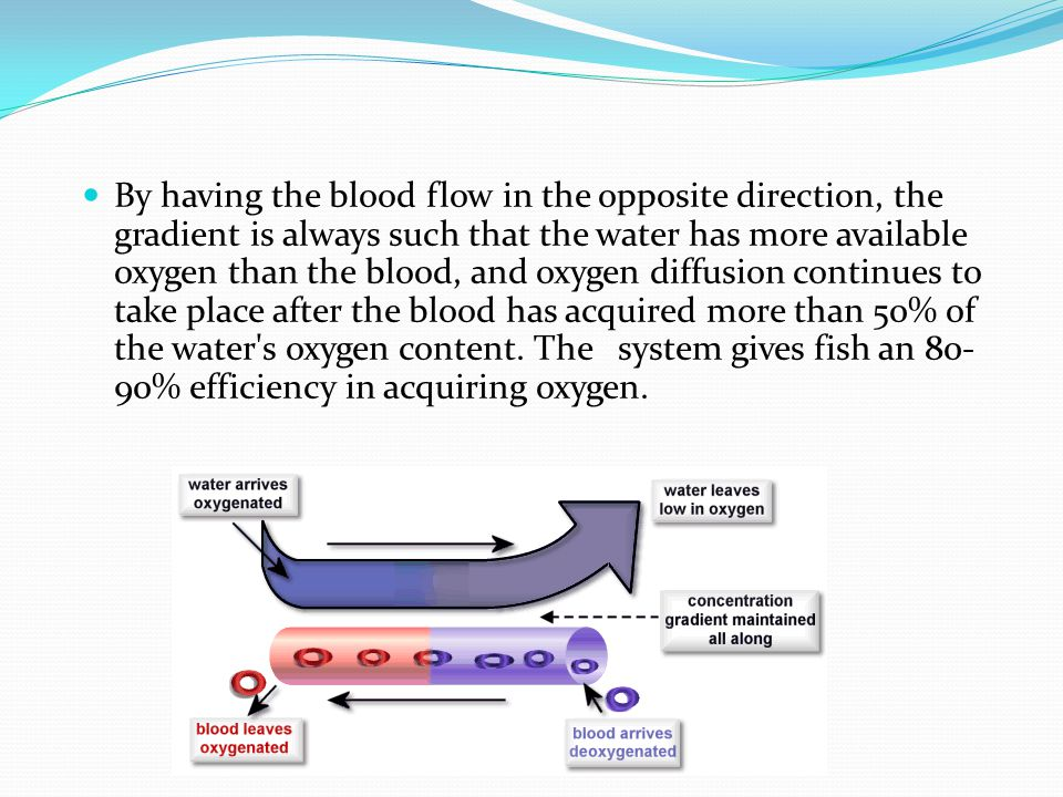 By having the blood flow in the opposite direction, the gradient is always such that the water has more available oxygen than the blood, and oxygen diffusion continues to take place after the blood has acquired more than 50% of the water s oxygen content.