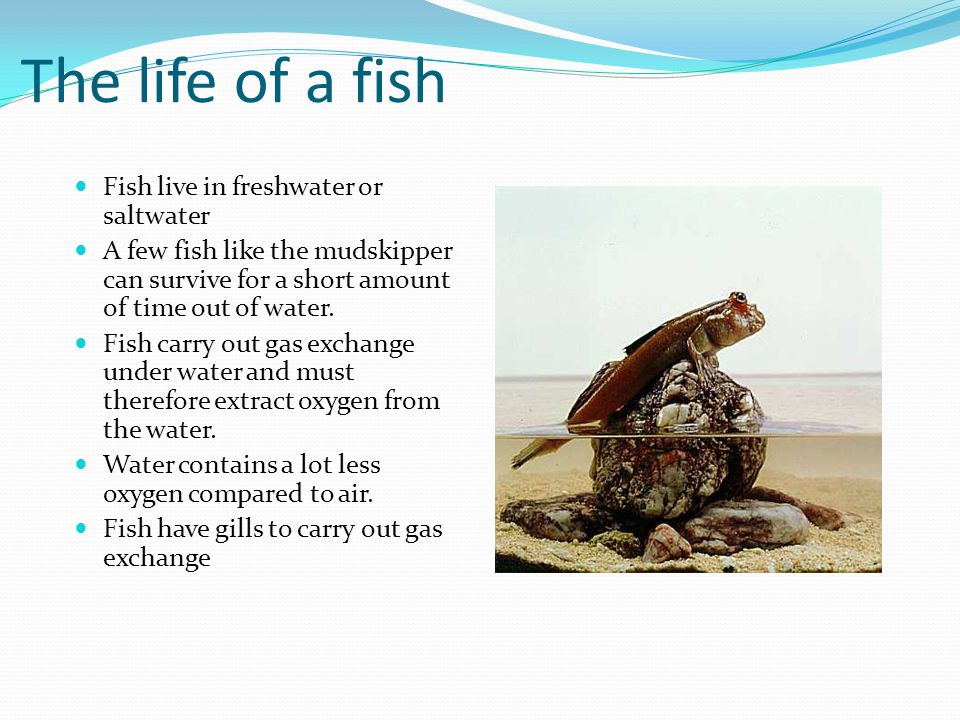 The life of a fish Fish live in freshwater or saltwater