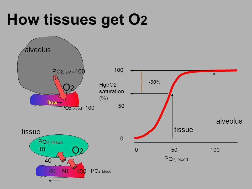 How tissues get O2 O2 O2 alveolus alveolus tissue tissue PO2, alv =100