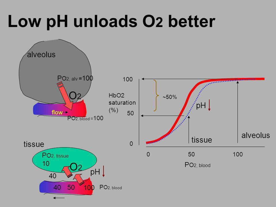 Low pH unloads O2 better O2 O2 alveolus pH alveolus tissue tissue pH