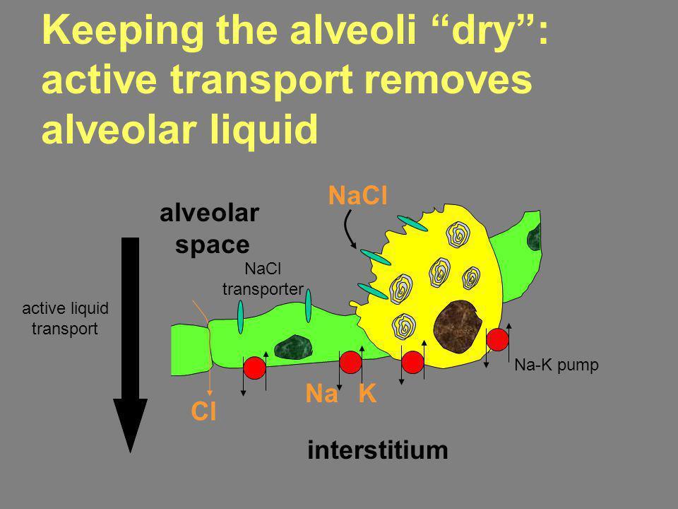 active liquid transport