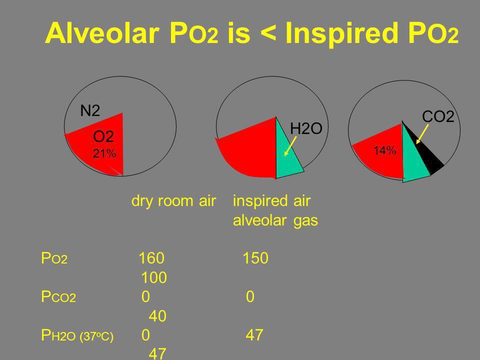 Alveolar PO2 is < Inspired PO2