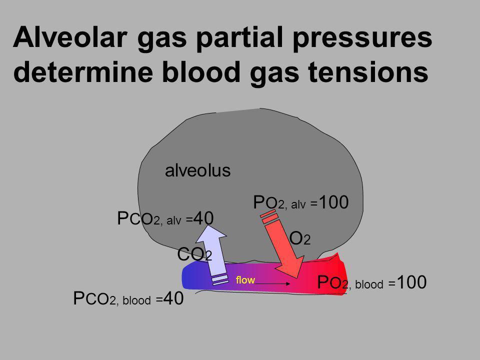 Alveolar gas partial pressures determine blood gas tensions