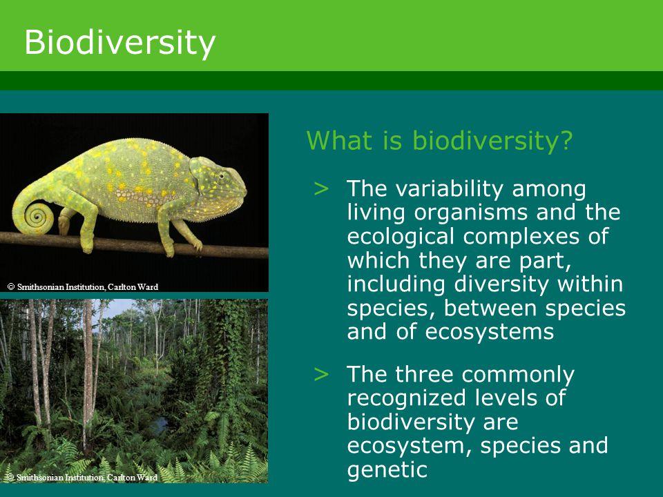 Biodiversity What is biodiversity