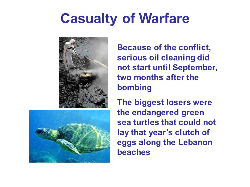 Casualty of Warfare Because of the conflict, serious oil cleaning did not start until September, two months after the bombing.