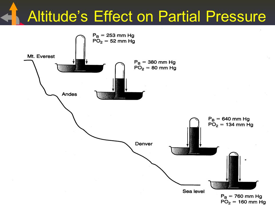 Altitude's Effect on Partial Pressure