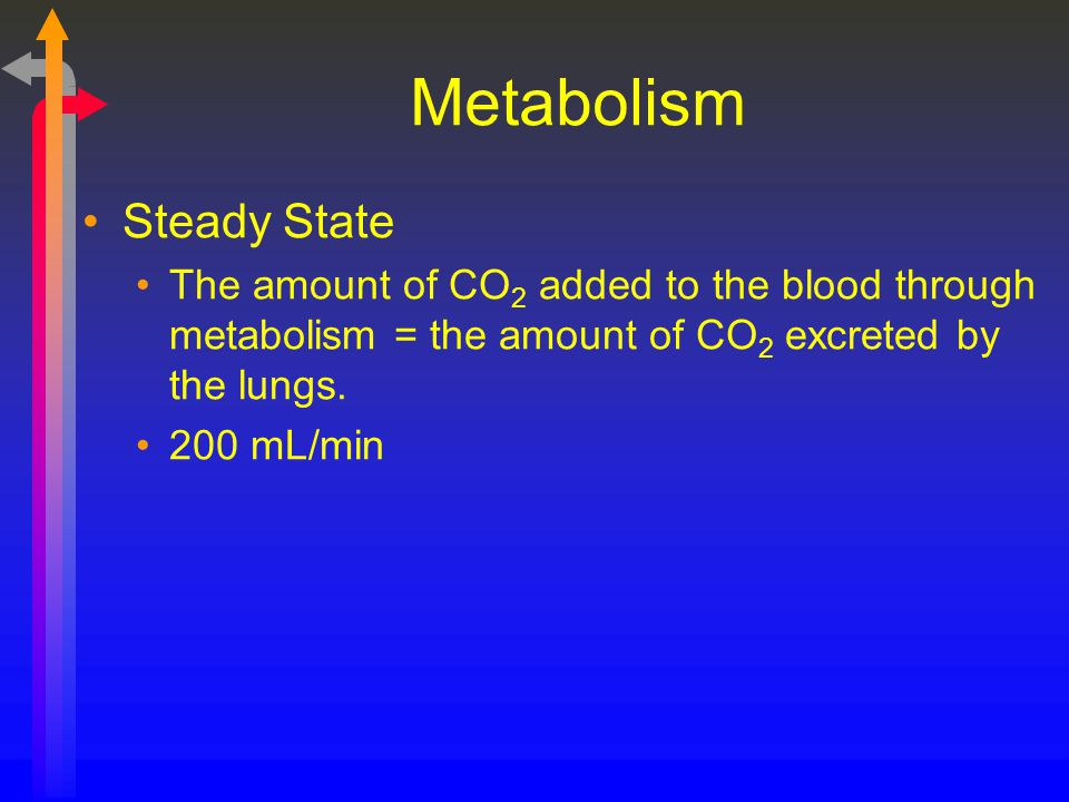 Metabolism Steady State