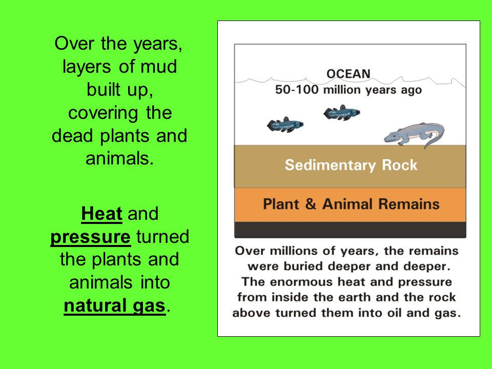 Heat and pressure turned the plants and animals into natural gas.