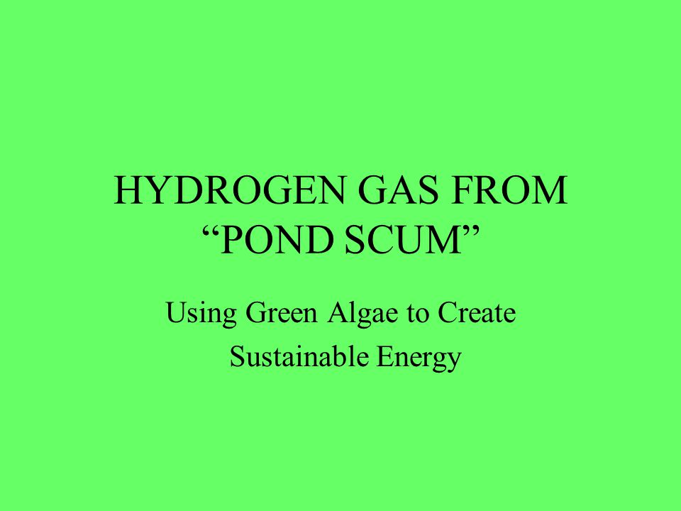 HYDROGEN GAS FROM POND SCUM
