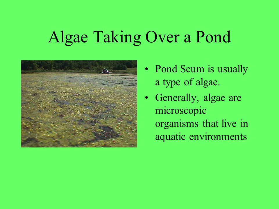 Algae Taking Over a Pond