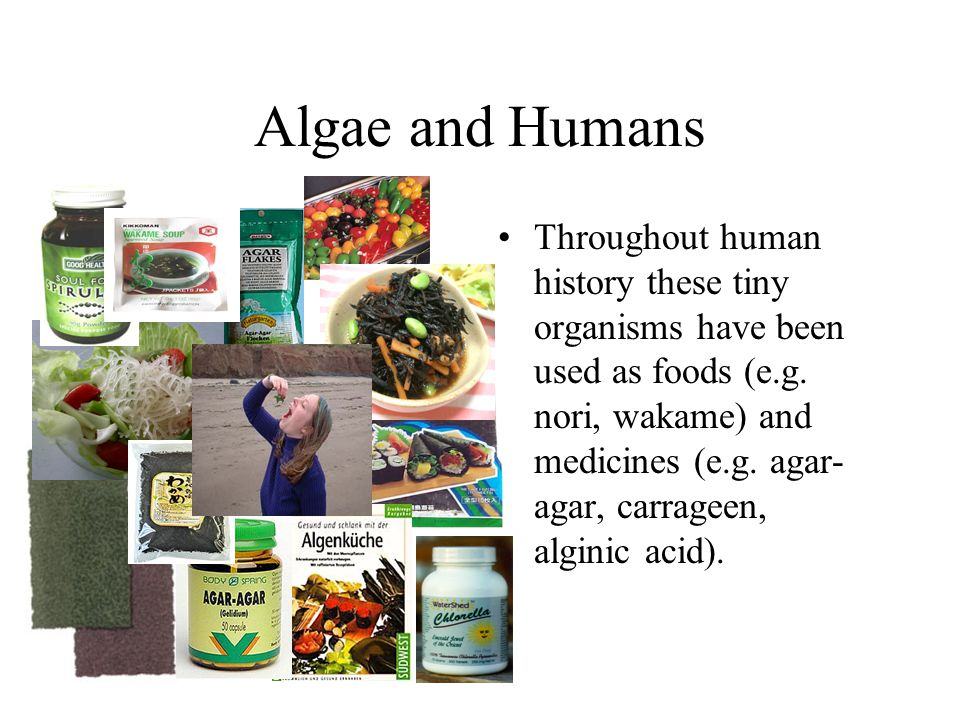 Algae and Humans