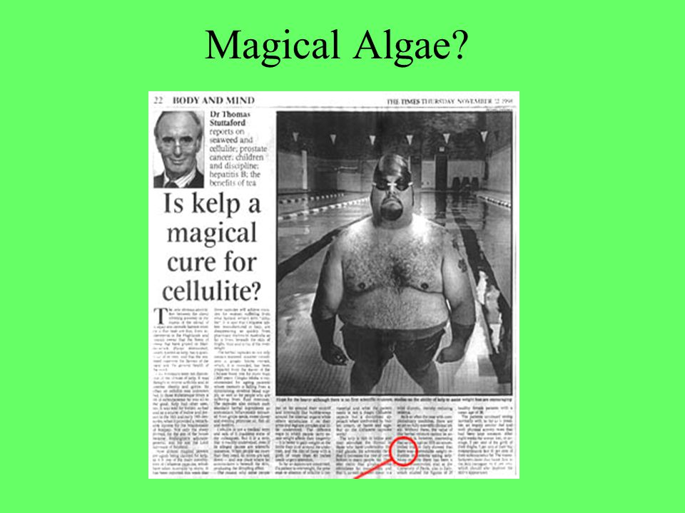 Magical Algae