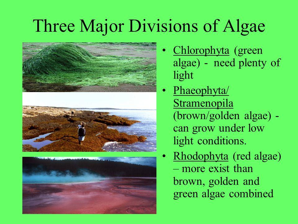 Three Major Divisions of Algae