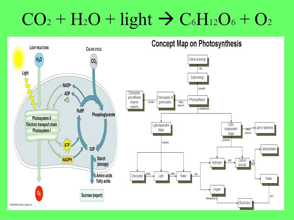 CO2 + H2O + light  C6H12O6 + O2