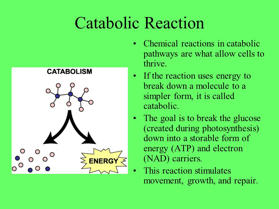 Catabolic Reaction Chemical reactions in catabolic pathways are what allow cells to thrive.