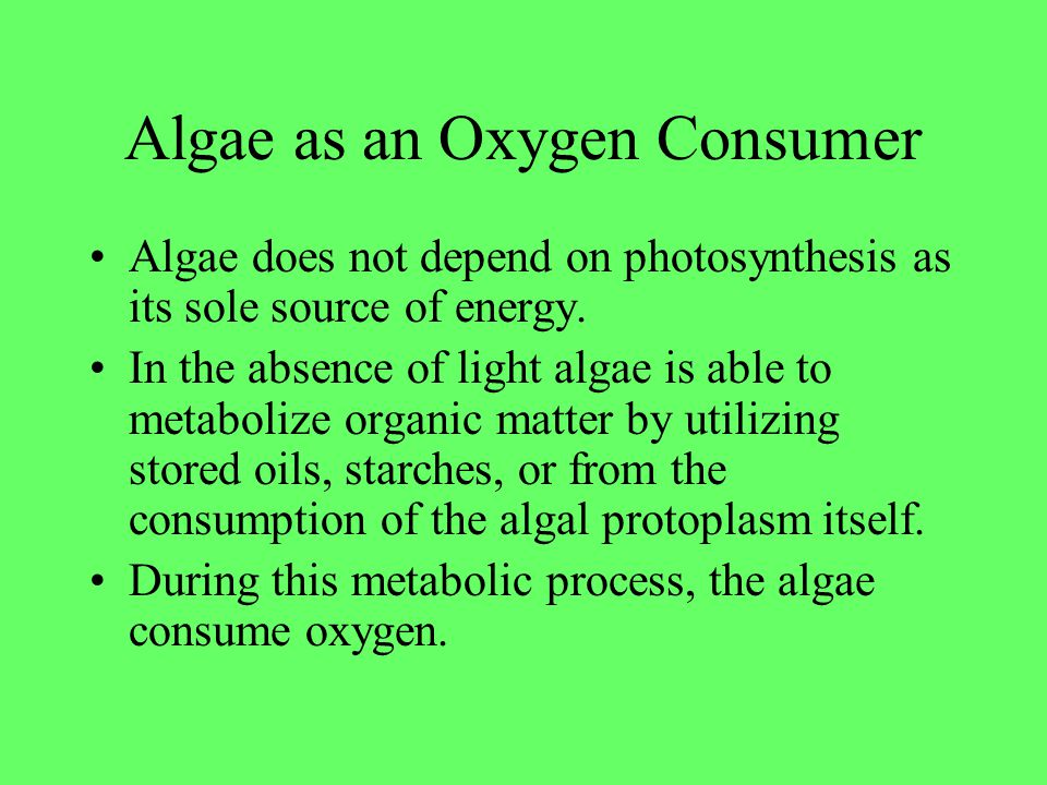 Algae as an Oxygen Consumer