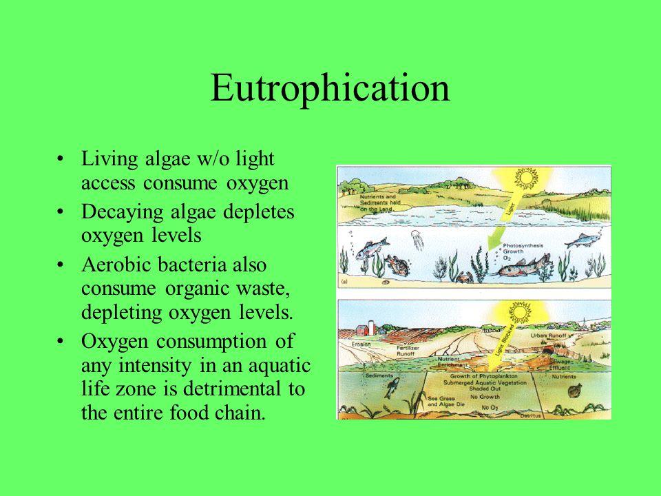 Eutrophication Living algae w/o light access consume oxygen