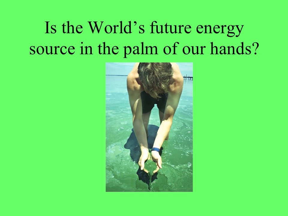 Is the World's future energy source in the palm of our hands