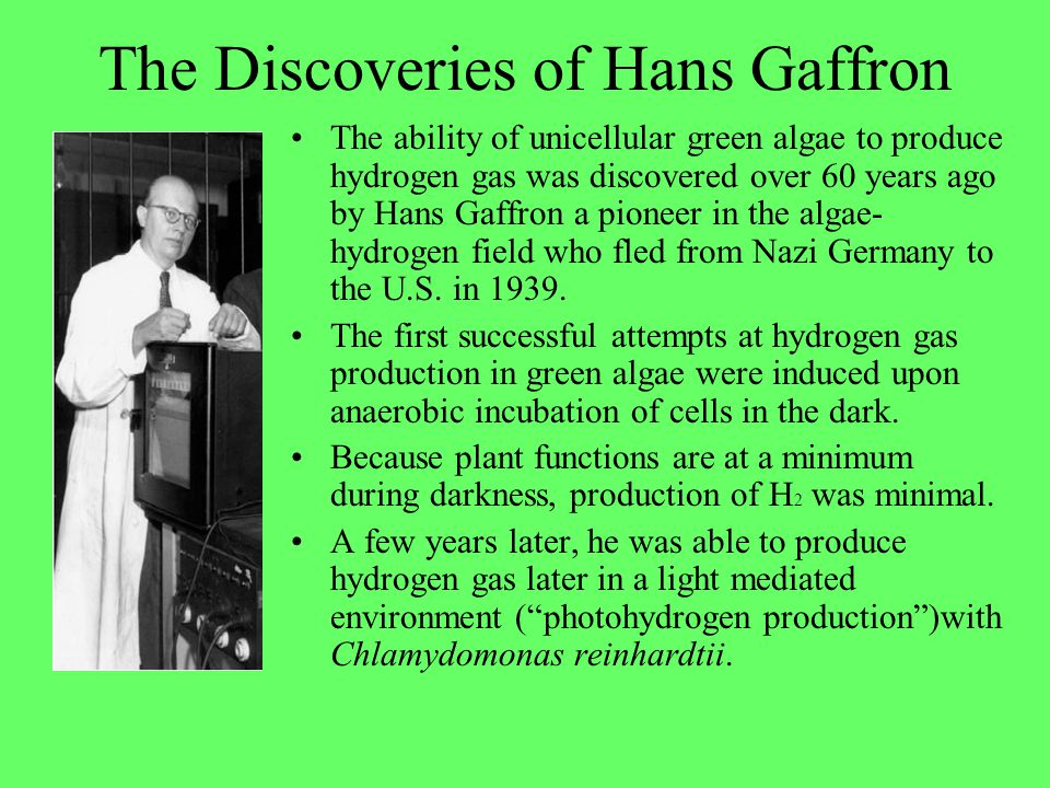 The Discoveries of Hans Gaffron