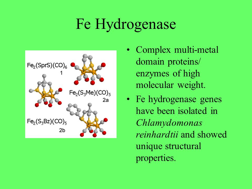 Fe Hydrogenase Complex multi-metal domain proteins/ enzymes of high molecular weight.