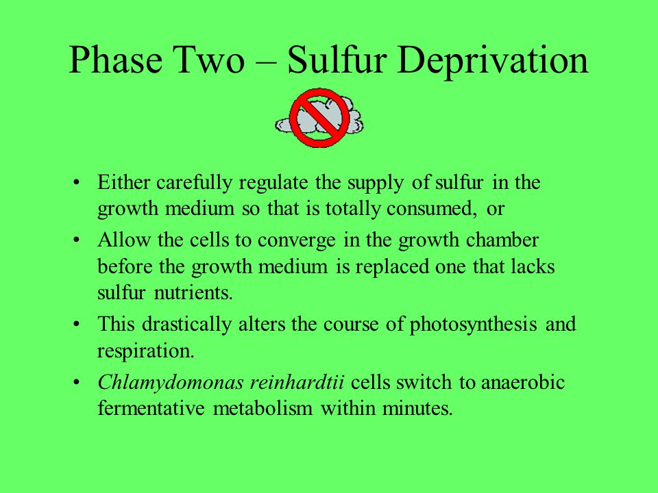 Phase Two – Sulfur Deprivation