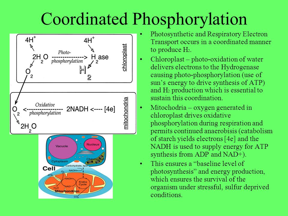 Coordinated Phosphorylation